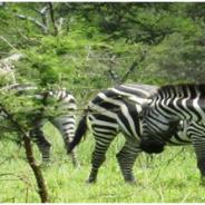 Honeymoon with a Rwanda Safari with Around Africa Safaris