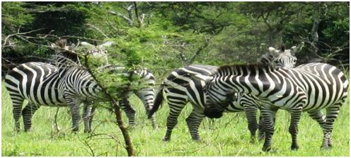 Around Africa Safaris
