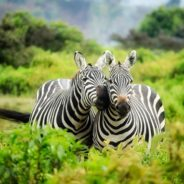 5 Reasons Why You Should Go on an African Safari